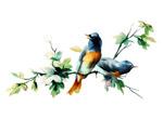 春天枝头的小鸟
