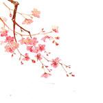 粉色梅花水墨