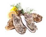 新鲜海蛎子