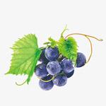 黑加仑葡萄