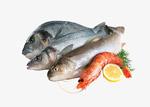 鱼和虾食材