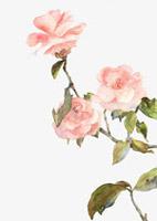 水墨淡粉花朵