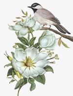 白色花朵与小鸟
