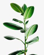 绿色免扣植物