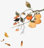 彩绘柿子树