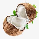 打开的椰子