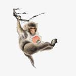 水墨工笔猴子