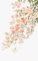 唯美花朵元素