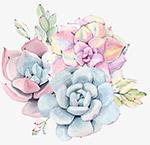 手绘彩色多肉植物
