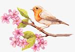 水彩梅花小鸟