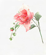 水彩玫瑰花插画