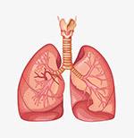 肺部器官图