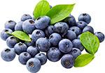 蓝莓免抠图