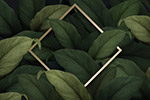 植物装饰边框素材