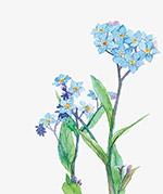 春天水彩花朵