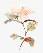水彩花朵装饰