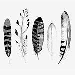 黑白手绘水彩羽毛