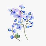 水彩风淡紫色花朵果实