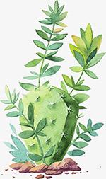水彩绿色仙人掌