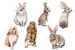 水彩兔子剪贴画