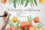 水彩野花植物