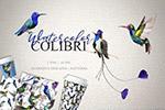 水彩鸟类剪贴画