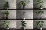 �b�植物3D模型