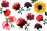 手绘水彩设计花卉