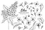 黑白线描花卉植物插画