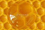 蜂蜜蜂巢】背景