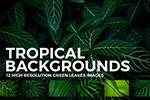 热带植物叶子背景
