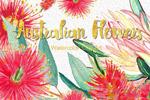 澳大利亚鲜花水彩