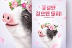猪年促销海报5