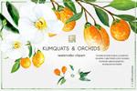 水彩金橘和兰花