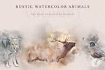 动物水彩手绘插图