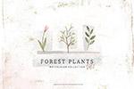 水彩森林植物花卉