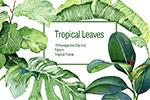 热带植物水彩图片